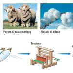 Fibre tessili: cotone e lana