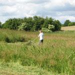 Wiesenmahd im Biesenthaler Becken