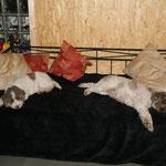 und auch Charlotte und ihre Tochter Bona Cara schlafen bei so viel Besuch....