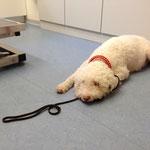 letzter Gesunheitscheck beim Tierarzt