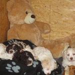 Die C´s auf ihrem Lieblingsschlafplatz