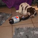 Franca lernt hier schon mal Flaschen zu apportieren um ihren zukünftigen Besitzern viel Freude zu bereiten ;)