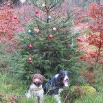 ...so einen Baum findet man bei uns mitten im Wald...