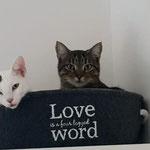 Alice und Torro