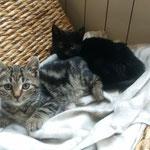 Flecky und Spotty