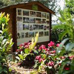 Exposition photos du Tibet  et rhododendron rouge : emblème du Népal