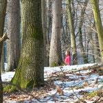 Jeder sucht sich seinen Baum, den wir dann gemeinsam (oder jeder für sich) übers Jahr 2017 besuchen