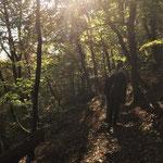 Am Sonntag auf dem Kellerwaldsteig