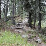 In den Wald eintauchen