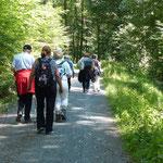 """""""Aufstieg"""" zur Alteburg im Schlingswald bei Lorsbach auf bequemen Wegen"""