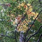 Die Blätter färben sich bunt