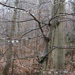 Glitzernde Wassertropfen - sieht man nur, wenn man auch bei Regen in den Wald geht