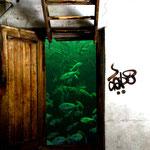 acquario - photo collage