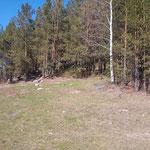 Поляна на небольшом склоне, а в лесу красивые скалки