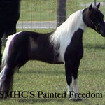Grand pere paternel : SMHC'S  PAINTED FREEDOM