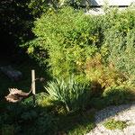 Schattenspiele im Garten
