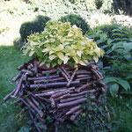 Grün auf altem Holz