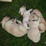Schlaf im Gras