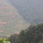 Grenze zum tropischen Bergregenwald