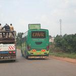 Rindertransport mit Überlandbus