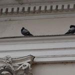 Голуби на здании академии
