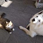 Jacky Hund  und Katze meiner Tochter