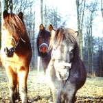 Westerwald 1991
