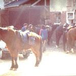 Sternritt der Reiterfreunde Staudt
