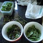 Zutaten für Frühlingskräutersuppe