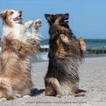 Annett Mirsberger Hundefotografie