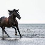 Pferdeshooting am Strand tierpfoto