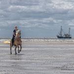 Shooting mit Pferd in St. Peter-Ording mit Fotografie Annett Mirsberger