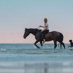 Pferdeshooting im Wasser-in St. Peter-Ording tierpfoto