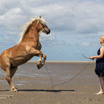 Haflinger steigt am Strand-Fotografie Annett Mirsberger