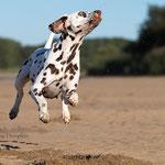 Actionfoto von tierpfoto