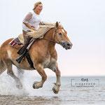 Pferd im Galopp am Strand mit tierpfoto