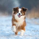 Hundeshooting Eiderstedt-Fotografie Annett Mirsberger