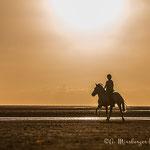 Pferdeshooting im Sonnenuntergang mit tierpfoto