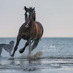 Strandshooting mit Pferd-Fotografie Annett Mirsberger in SH