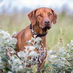Hundefoto Annett Mirsberger