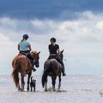 Shooting mit Pferden am Strand-Fotografie Annett Mirsberger