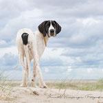 Dogge am Strand mit tierpfoto
