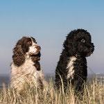 Hundeportrait Fotografie Annett Mirsberger