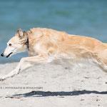Hundefotografie Hund Annett Mirsberger