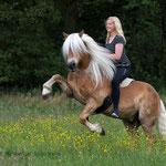 Reiterin auf steigendem Pferd-Schleswig-Holstein tierpfoto