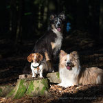 Fotoshooting mit Hunden mit tierpfoto Mirsberger