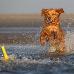 Wassershooting Mirsberger Tierfotografie