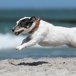 Hundefotografie Annett Mirsberger