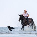 Pferd mit Reiterin am Strand-tierpfoto in St. Peter-Ording