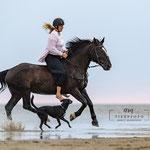 Shooting mit Pferd am Stand-Fotografiert von tierpfoto auf Eiderstedt
